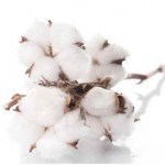 Does Organic Cotton Shrink?