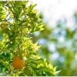 Spacing Fruit Trees