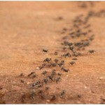 Are Ants Blind?