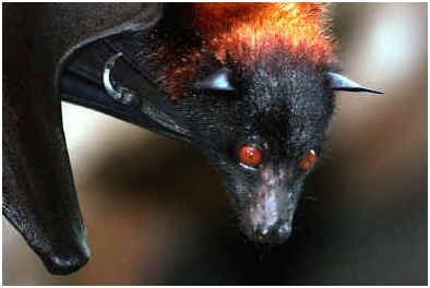 are-bats-really-blind