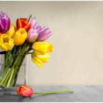 Are Tulips Edible?