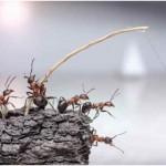Can Ants Swim?