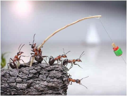 can-ants-swim