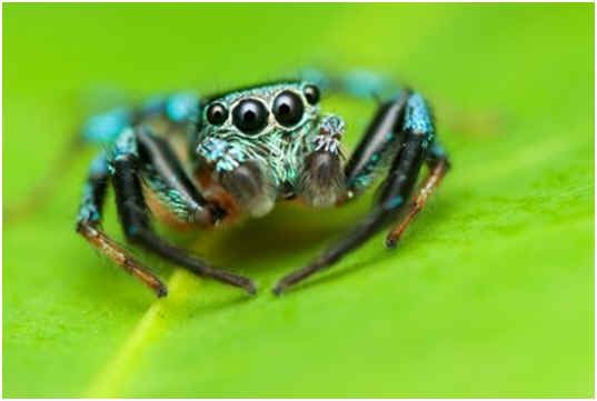 Can Spiders Smell? | Sophisticated EDGE