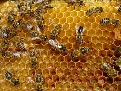 What Everyone Needs to Know About Bee Stings