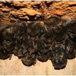 Do Bats Hibernate in Winter?