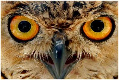 do-owls-eat-bats