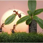 How Do Ants Reproduce?