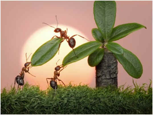 how-do-ants-reproduce
