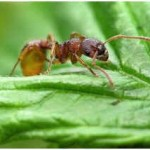 What Do Ants Eat?