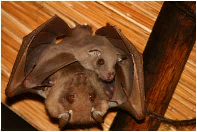 what-do-baby-bats-eat