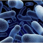 What Is Bacterial Bronchitis?