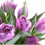 What Is the Scientific Name of the Tulip?