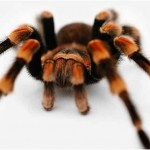 What Spiders Have Deadly Bites?
