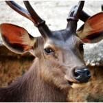 Are Deer Colorblind?