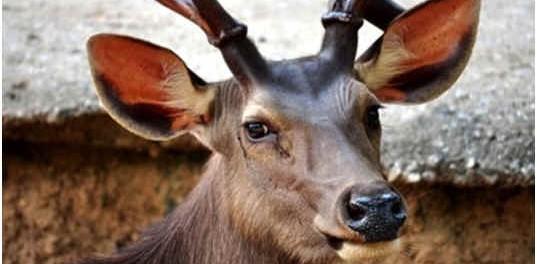 are-deer-colorblind
