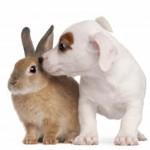 Are Rabbits Smart?