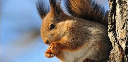 can-squirrels-swim