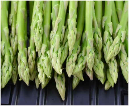 Can You Freeze Asparagus Sophisticated Edge