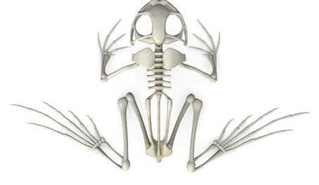 do-frogs-have-bones
