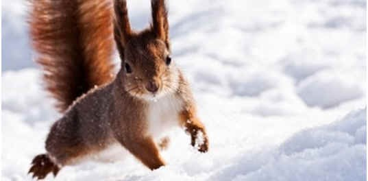 do-squirrels-hibernate