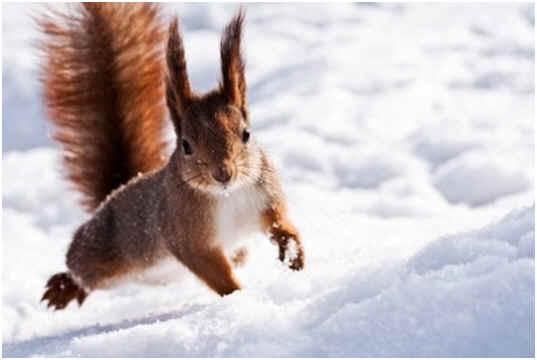 do squirrels hibernate sophisticated edge