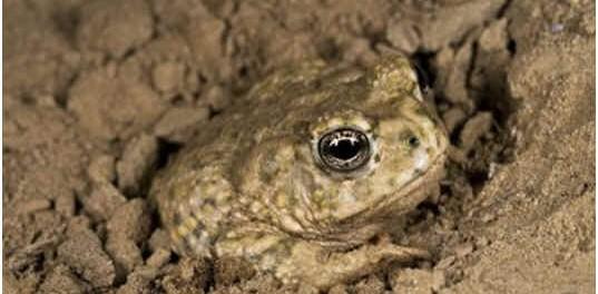 do-toads-hibernate