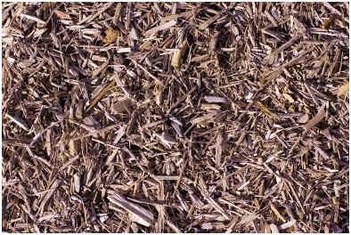 does-mulch-attract-termites