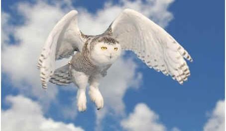 how-do-owls-fly-silently