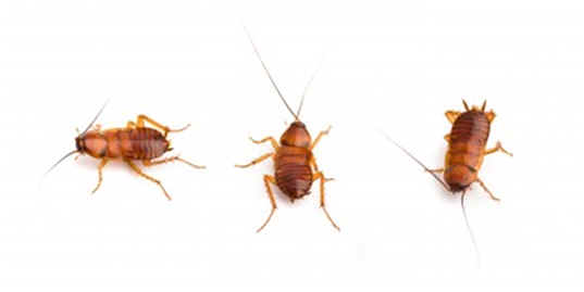 Can Roaches Smell Food