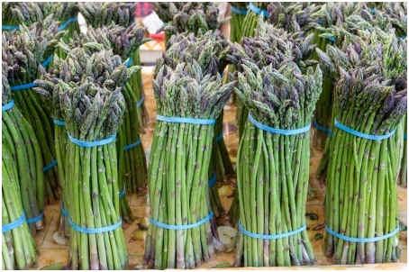 how-to-harvest-asparagus
