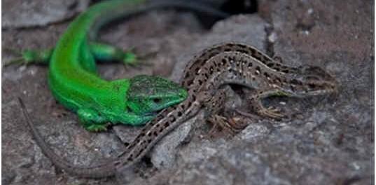 what-do-salamanders-eat