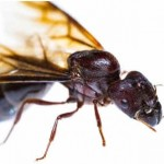 What Is the Role of the Ant Queen?