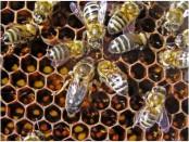 Wasp Life Cycle