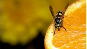 Can Wasps Smell?