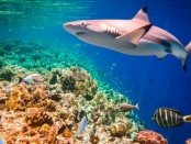 How Long Do Sharks Live? A Scientific Look at Shark Longevity
