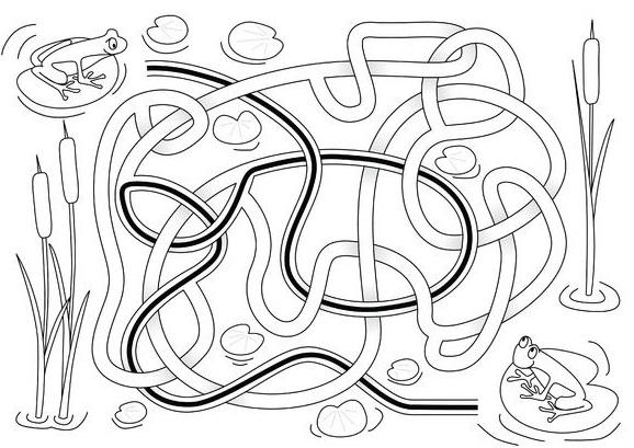 Frog Activities: Frog Maze Solution