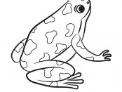 Frog Activities: Coloring Page